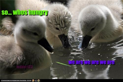 Cheezburger Image 4760161024