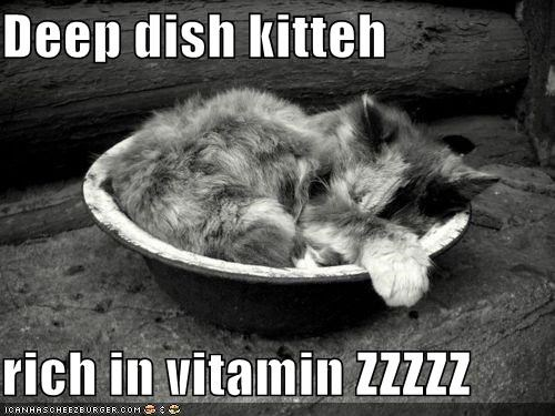 asleep caption captioned cat deep deep dish dish kitten pun rich sleeping vitamin z zzz - 4760772352