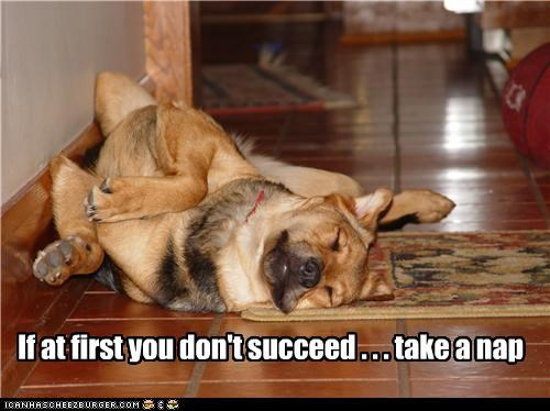 adage advice dont first nap succeed take whatbreed