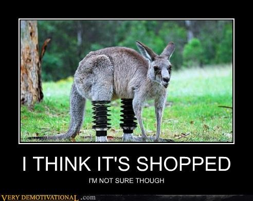 hilarious,kangaroo,photoshop,springs