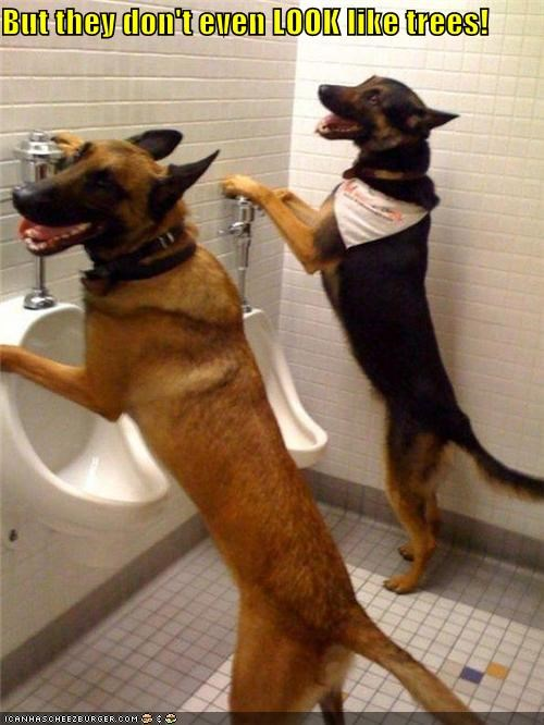 bathroom,confused,dont,german shepherd,german shepherds,look,potty,resemble,trees,urinal