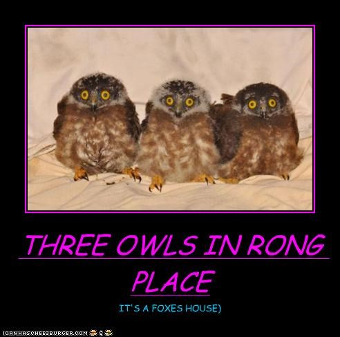 THREE OWLS IN RONG PLACE IT'S A FOXES HOUSE)