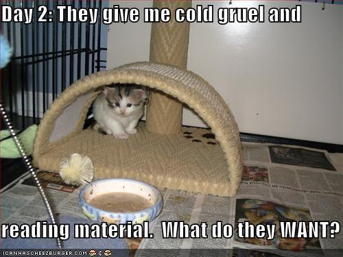 confused food gruel kitten lolcats lolkittehs newspapers - 476257536
