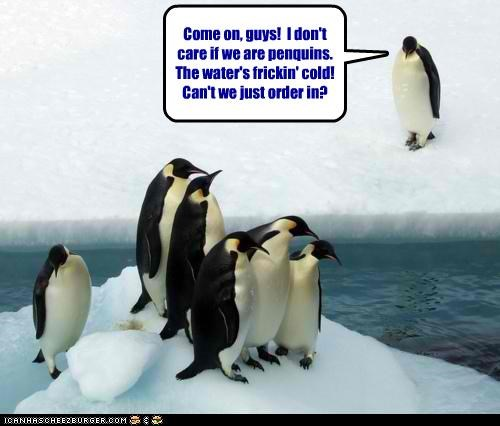 caption captioned cold come on do not want dont-care food order in penguin penguins suggestion water