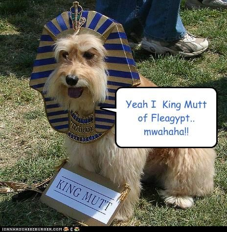 egypt,flea,king,king tutt,mixed breed,mutt,pun,schnauzer,similar sounding