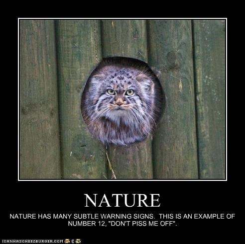 """NATURE NATURE HAS MANY SUBTLE WARNING SIGNS. THIS IS AN EXAMPLE OF NUMBER 12, """"DON'T PISS ME OFF""""."""