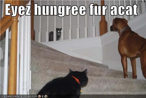 Cheezburger Image 4763382784