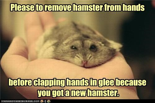 Please to remove hamster from hands before clapping hands in glee because you got a new hamster.