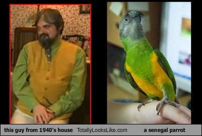 this guy from 1940's house Totally Looks Like a senegal parrot
