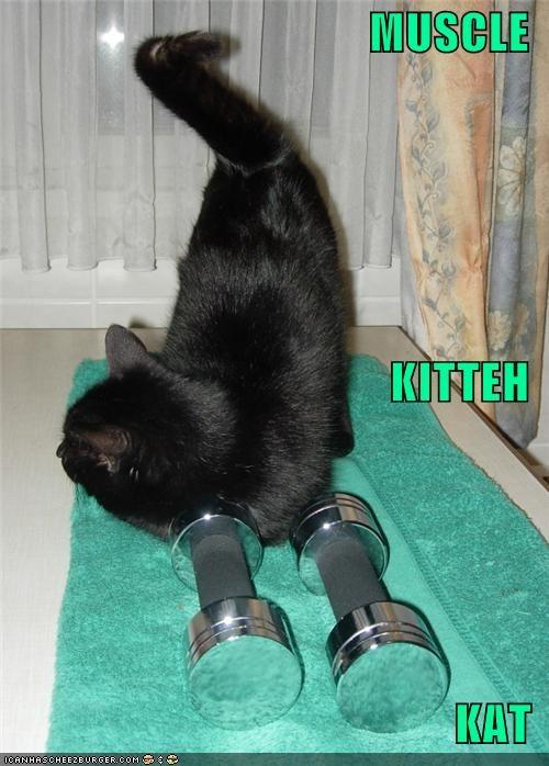 MUSCLE KITTEH KAT