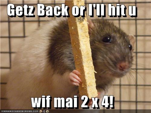 Cheezburger Image 4763952384