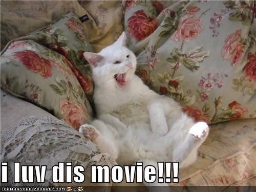 caption captioned cat do want excited laughing love Movie watching - 4764301568