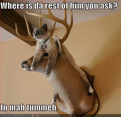 Where is da rest of him you ask?  In mah tummeh.