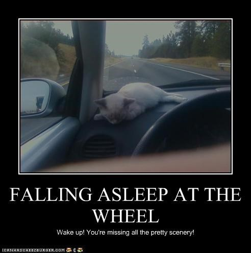 FALLING ASLEEP AT THE WHEEL Wake up! You're missing all the pretty scenery!