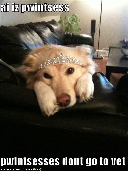 do not want,excuse,labrador,pretty,princess,princesses,tiara,vet,wearing