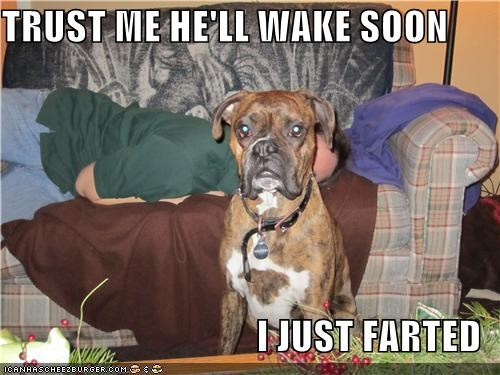 boxer farted just mixed breed SOON trust trust me wake
