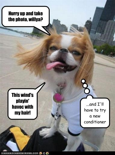 Hurry up and take the photo, willya? This wind's playin' havoc with my hair! ...and I'll have to try a new conditioner