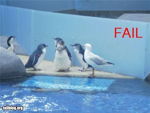 acting casual animals birds failboat fitting in g rated penguin - 4766402816