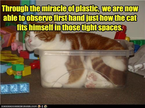 caption captioned cat contortion fits fitting miracle observation observe plastic space tabby tight - 4766462976