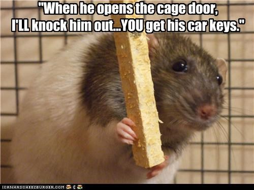 cage,caption,captioned,car,door,keys,knockout,open,opens,plan,rat
