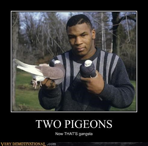 gangsta hilarious mike tyson pigeons - 4767035648