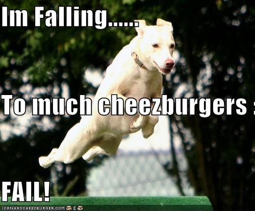 Cheezburger Image 4767066880