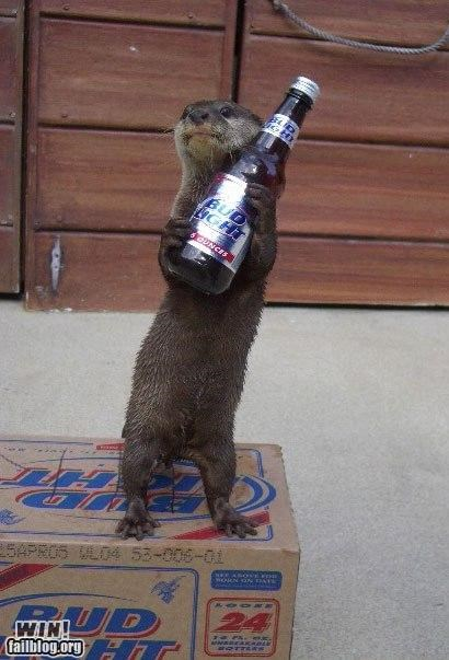 animals,beer,bud light,drinks,hes-a-light-weight,otters