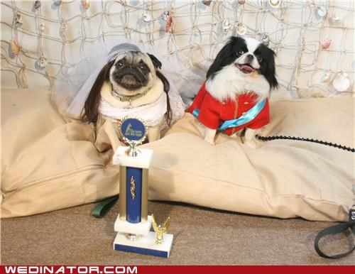dogs funny wedding photos royal wedding wedding - 4767461888