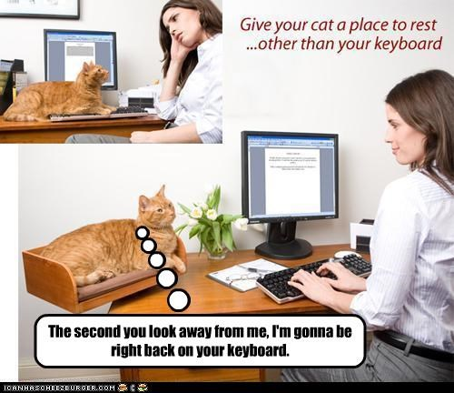 Would this really work with your cat?