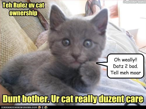 Teh Rulez uv cat ownership Dunt bother. Ur cat really duzent care Oh weally!! Datz 2 bad. Tell meh moar Chech1965 160511