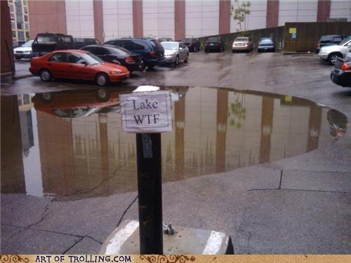 IRL lake parking lot wtf - 4768306432