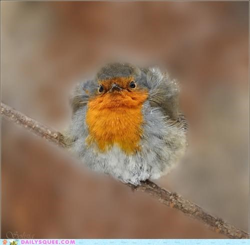 baby bird conflagration feathers fluff Fluffy metaphorical robin - 4768659712