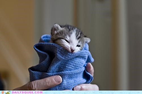 adorable baby cat kitten parody song swaddled title - 4768683008