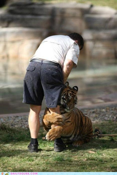 acting like animals attachment clinginess clingy do not want needy possessive quote redundancy tiger titanic