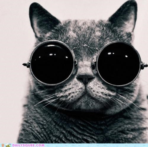 acting like animals,cat,do want,glasses,i can has,night vision,question,style,styles,trick question