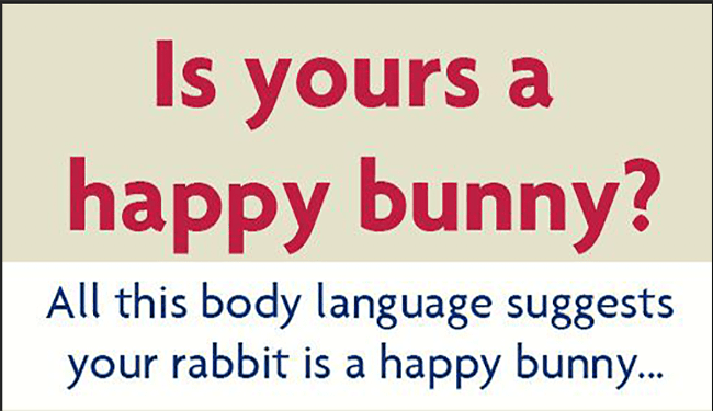 tips bunny relaxed funny - 4768773