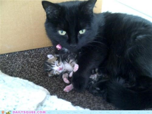 adorable,baby,cat,Cats,cuddling,kitten,mother,protecting,reader squees,safe