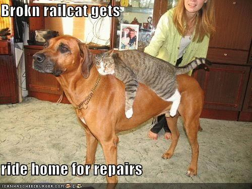 borked broken carrying cat home lazy monorail cat repairs ride whatbreed