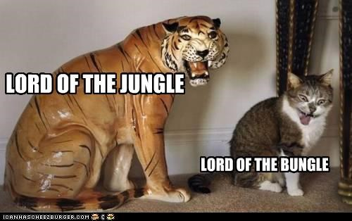cat critters mockery tiger