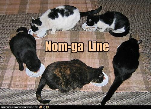 caption captioned cat Cats conga Conga line nom prefix pun - 4770110976