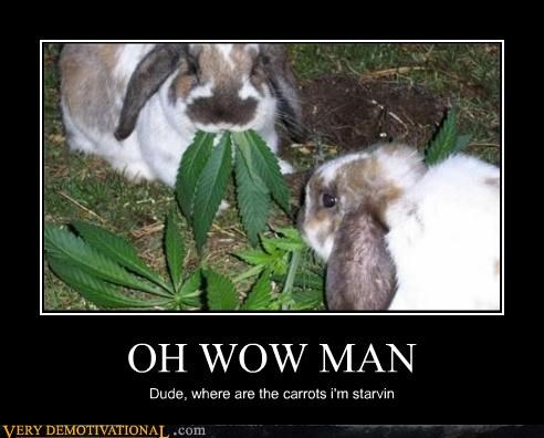 bunnies carrots drugs hilarious weed - 4770120704