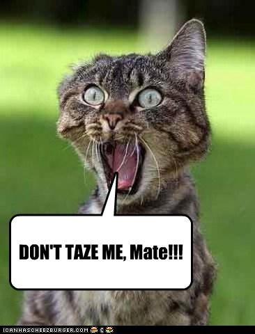 DON'T TAZE ME, Mate!!!