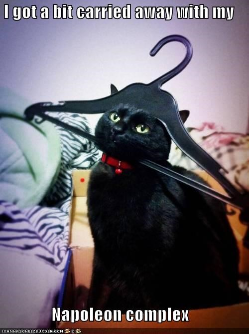a bit,caption,captioned,carried away,cat,clothes hanger,hanger,hat,napoleon,napoleon complex