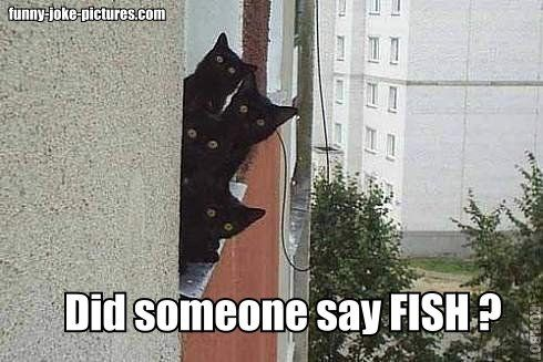 Memes fish Cats - 4770821