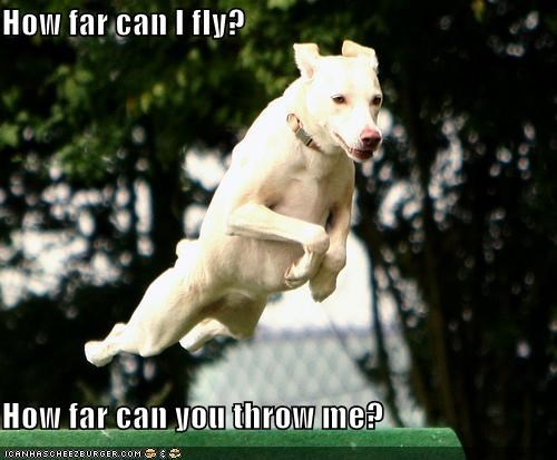 far fly flying how jumping labrador mixed breed throw throwing