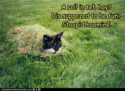 A roll in teh hay? Dis suppozed to be fun? Stoopid hoomins!