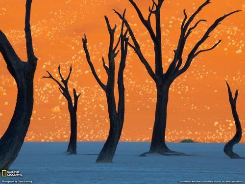 Frans Lanting,Namibia,Photo,this-isnt-shopped
