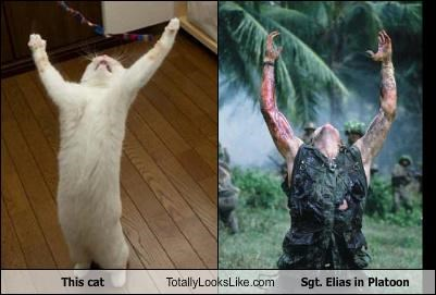This cat Totally Looks Like Sgt. Elias in Platoon