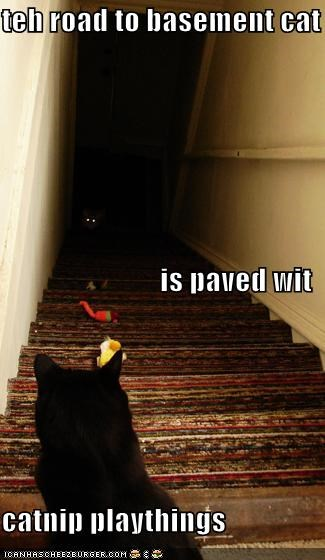 basement cat,catnip,Cats,eyes,lolcats,religion,stairs,toys