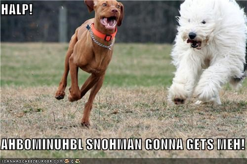 abominable snowman,chased,chasing,halp,help,mixed breed,old english sheepdog,rhodesian ridgeback,running,snowman